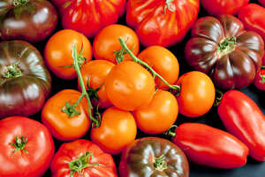 tomato-seed-collections